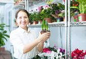 žena vypadá hyacint na květinářství — Stock fotografie