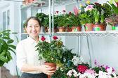Kobieta z roślin róż w sklepie kwiat — Zdjęcie stockowe