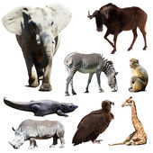 Set of few african animals — Stock Photo