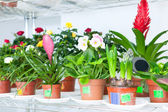 Shelves with different flowers — Stock Photo