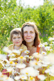 Mother with daughter in camomile plant — Stock Photo