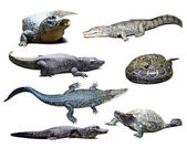 Reptiles over white with shade — Stock Photo