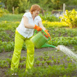 Mature woman watering plant   — Stock Photo