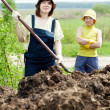 Stock Photo: Farmers works with manure at field