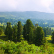Stock Photo: Mountains landscape with cedar forest