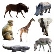 Stock Photo: Set of african animals