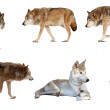 Stock Photo: Set of few wolves. Isolated over white background