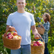 Man and woman picks apples — Stock Photo #30997163