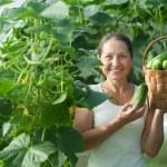 Woman harvesting cucumbers — Stock Photo