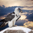 Stock Photo: Griffon vulture against sky background