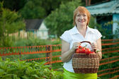 Happy mature woman harvested vegetables — Stock Photo