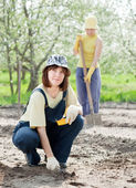 Women works at vegetables garden — Stock Photo