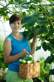 Woman with harvested cucumber — Stock Photo