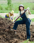 Farmers works with manure — Stock Photo