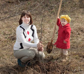 Woman with daughter sets tree — Stock Photo