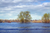Landscape with flooded meadow — Stock Photo