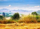 Catalan rural lahdscape — Stock Photo