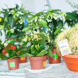 Cactus and kalanchoe in flower shop — Stock Photo