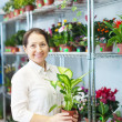 Stock Photo: Womwith Dieffenbachiin flower store