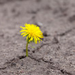 Growing  yellow flower sprout  — Stock Photo