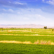 Rural landscape with fields in Aragon — Stock Photo
