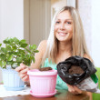 Stock Photo: Woman transplants Kalanchoe plant in flowerpot