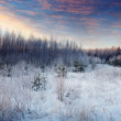 Beauty winter landscape in morning — Stock Photo