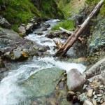 Mountains stream — Stock Photo #32307185