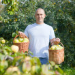 guy with basket of harvested apples in garden — Stock Photo