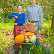 Man and woman  with  harvested vegetables  — Stock Photo