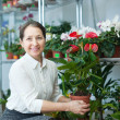Woman with anthurium plant  — Stock Photo
