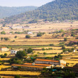 Fields in  outskirts of Cardona — Stock Photo