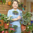 Woman with Calathea plant in flower store — Stock Photo