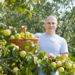 Stock Photo: Guy with basket of harvested apples