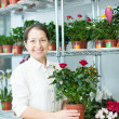 Female florist with roses plant  — Stock Photo
