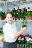 Florist with hyacinth (Hyacinthus) at store — Stock Photo
