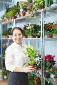 Woman with Dieffenbachia in flower store — Stock Photo