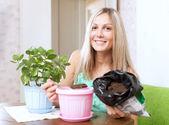 Mujer trasplantes kalanchoe planta en maceta — Foto de Stock