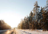 Road through winter forest — Stock Photo