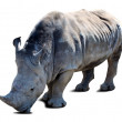 Stock Photo: Rhinoceros over white with shade