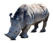 Rhinoceros over white with shade — Stock Photo