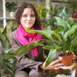 Woman chooses aspidistra — Stock Photo