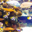 Stock Photo: Fish at coral reef