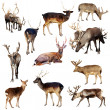Stock Photo: Set of many deer