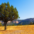 Single tree at mountainous terrain — Stock Photo
