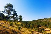 Sunny view of Serrania de Cuenca — Stock Photo