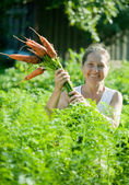Woman picking fresh carrots — Stock Photo