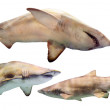 Set of sharks. Isolated over white — Stock Photo