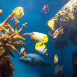 Stock Photo: Coral reef area