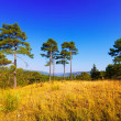 View of forest mountains landscape — Stock Photo